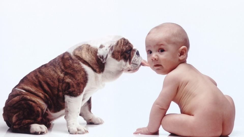 hvad spiser en hund