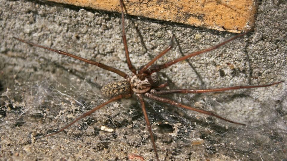 når man er bange for edderkopper