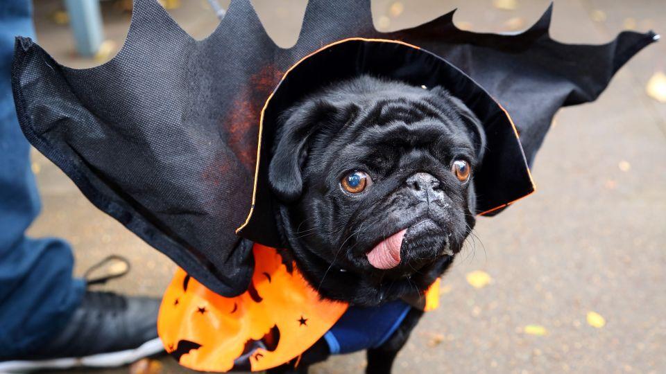 halloween kostumer til voksne