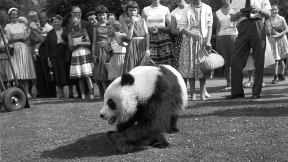 københavn zoo panda