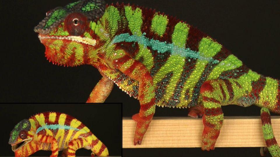 dyr der skifter farve