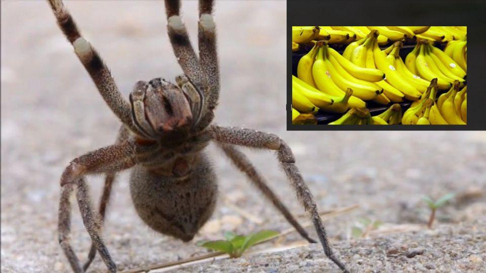 Engelsk Aldi lukket: Gjorde uhyggeligt fund i bananklase