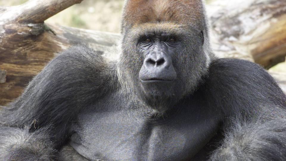 mænd og bryster zoo i Sjælland