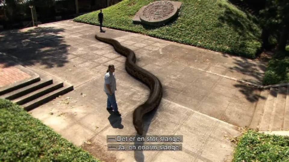 kaempeslange fra fortiden faar anakondaen til at ligne en haveslange