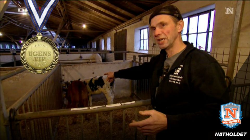 års landbrugsauktion Helt vild med køer:   En rigtig fræk én   TV 2 års landbrugsauktion