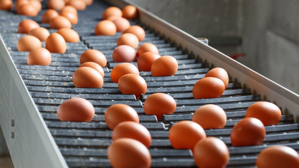 Sådan koger du dit æg perfekt | Mad