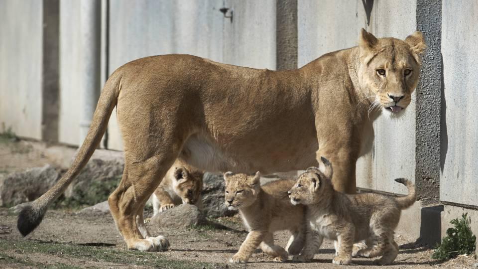 givskud zoo billige billetter