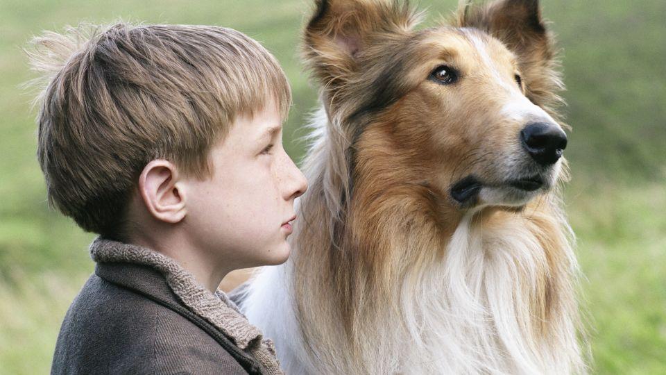 hvad hedder hunden fra tom og jerry
